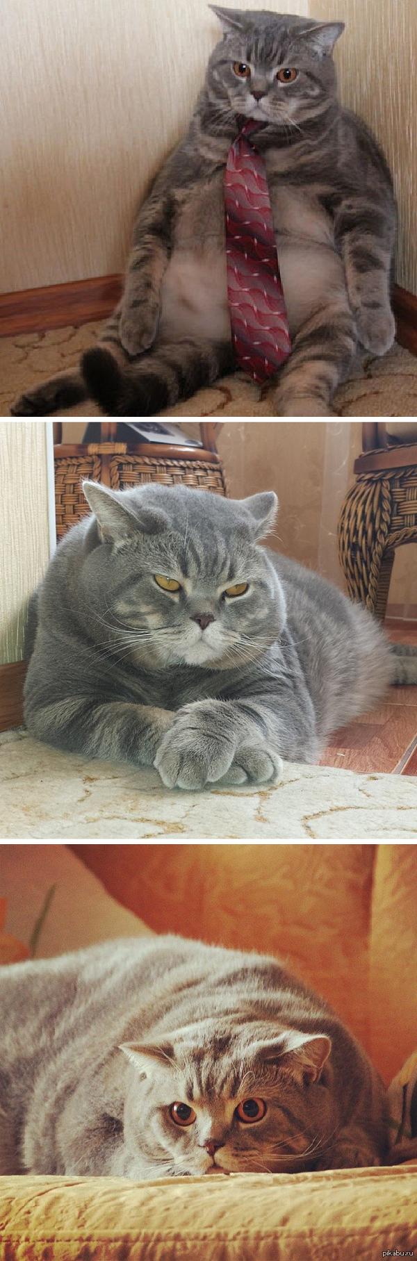 Очень забавный толстый кот нашелся в инстаграме http://instagram.com/nikulinyuri кот, инстаграм
