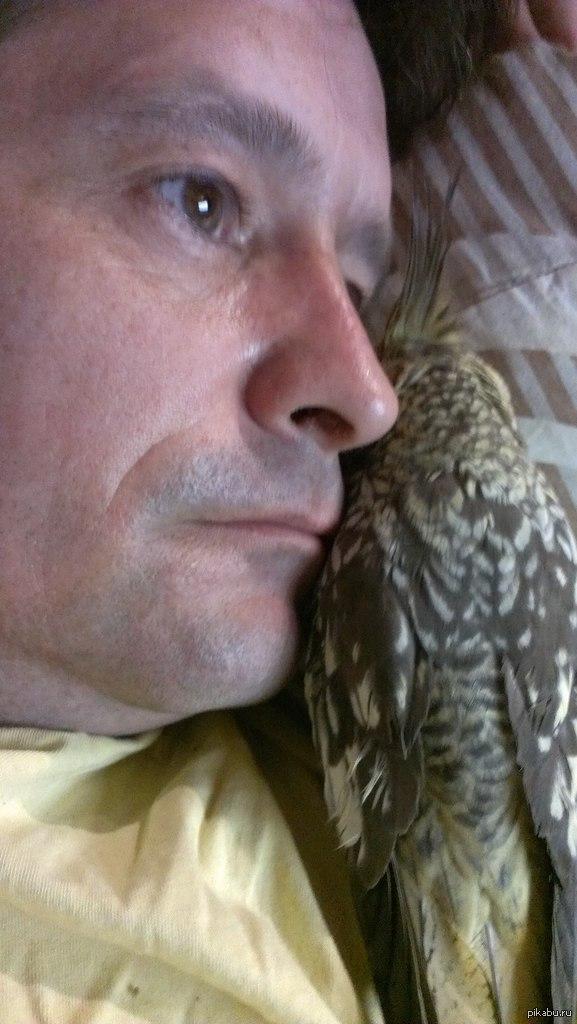 Что-бы навсегда попрощаться нам дали две недели. Это Нора. Мы прожили вместе 6 лет. Очень умная птица. На днях у неё отнялись ноги и она перестала есть. Доктор сделал рентген - вердикт: злокачественная опухоль  попугай, рак, смерть, всем насрать, печаль, тлен