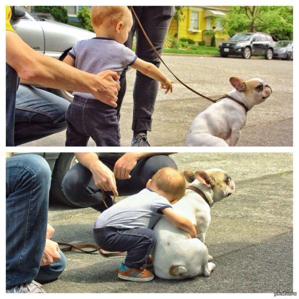 Папа,папа собачка...   малыш, собака, обнимашки
