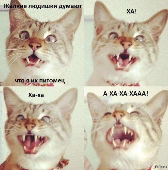Типичные коты   кот, Хозяева, Питомцы