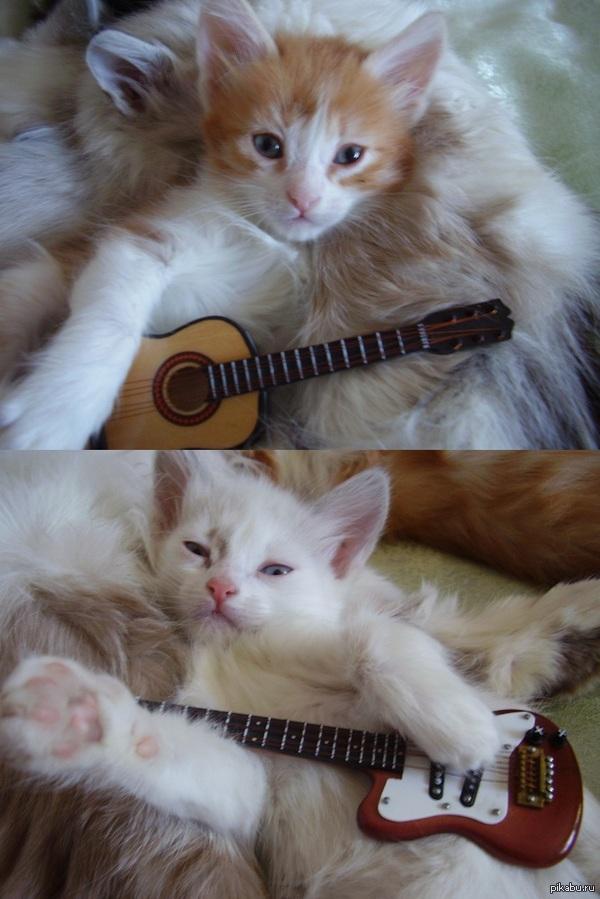 Котят раздали а фото остались   кот, милота