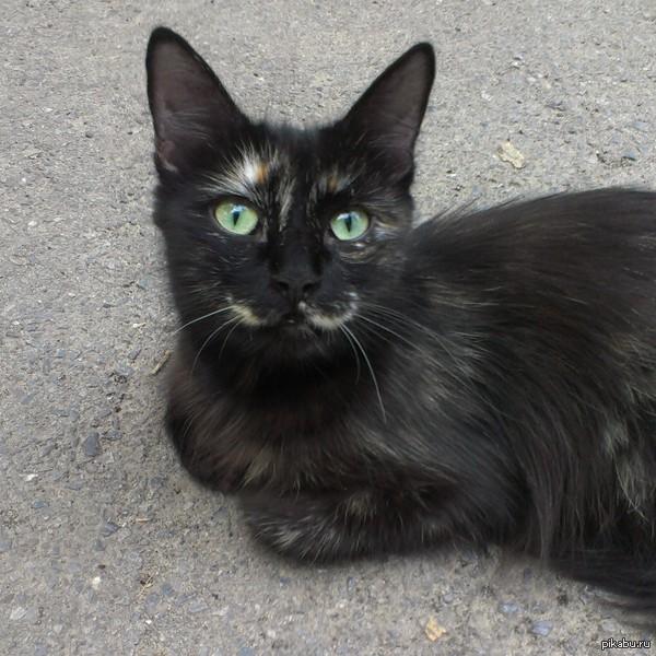 Для любителей кошек)   кот, милота:3