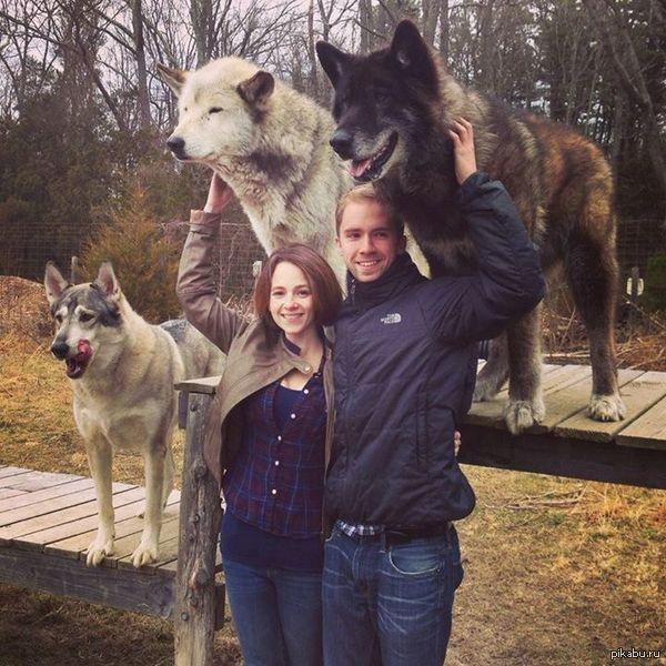 Реальные псы. Собаки, бигсайз, Животные